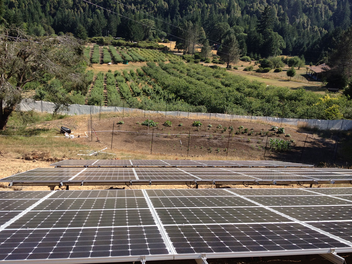 Whitethorn, CA: A 20 kW ground mount grid-tied system powering the home and operations of a local Quince farm.
